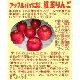画像3: 紅玉りんごのアップルパイ6.5号